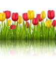 Green grass lawn with tulips sunlight and vector image vector image
