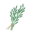 green rosemary sprig flat vector image