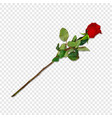 red rose on long stem isolated festive clip art vector image