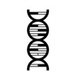 science genetic dna vector image