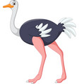 cartoon ostrich posing vector image