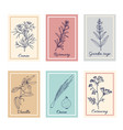 collection culinary herbs and spices vector image vector image