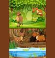 deer in the nature scene vector image
