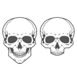 Different skulls on white background vector image