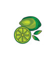 lime icon on a white background vector image