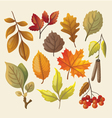 set colorful isolated autumn leaves vector image vector image