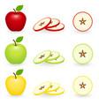 apple slice set isolated vector image