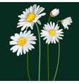 Chamomile flower mint leaves composition isolated vector image