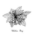 hand drawn of christmas berries on white backgroun vector image