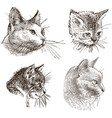 sketches house cats vector image vector image