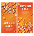Autumn sale banner set with pumpkin vector image vector image