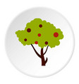 tall tree with fruits icon circle vector image vector image