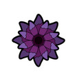 beauty violet flower floral natural petal vector image