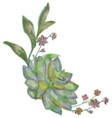 drawn watercolor succulent flower vector image vector image
