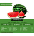 healthy collection watermelon vector image vector image
