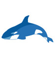killer whale cetacea animal aquatic animals orca vector image vector image