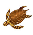 sea creature cheloniidae or green turtle engraved vector image vector image