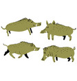 set with cute boars with wild pigs vector image