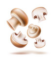 3d champignon mushroom sliced realistic mix vector image