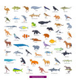 animals australia collection vector image vector image