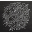 Peacock feathers chalkboard vector image