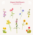 watercolor field flowers set elegant floral vector image