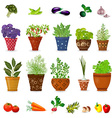collection of different herbs in art floral pots vector image vector image