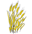 Spikes of ripe wheat vector image vector image