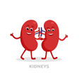strong healthy kidneys cartoon characters isolated vector image vector image