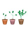 Three Fresh Watercress in Ceramic Flower Pots vector image vector image