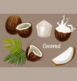 coconut palm fruits coco nut milk splash vector image