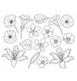 contoured simple different flowers set vector image vector image