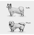 dog breed engraved hand drawn vector image vector image