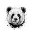 portrait a panda bear from a splash of vector image vector image