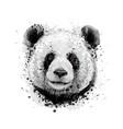 portrait a panda bear from a splash vector image vector image