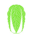 chinese cabbage isolated cabbage on white vector image vector image