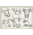 collection of hand-drawn cows vector image