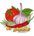composition with ripe vegetables herbs and pasta vector image vector image
