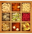 Nuts Collection Assorted vector image vector image