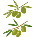 olive vector image