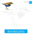 Banded pitta bird learn to draw vector image vector image