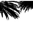 black palm branches silhouette on white background vector image