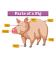 Diagram showing parts of pig vector image vector image