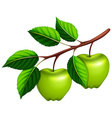 Green apples on the branch vector image vector image
