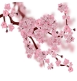 Japanese cherry tree The fluffy pink cherry vector image vector image