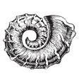 nautiloid vintage vector image vector image