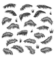 silhouette palm leaves set isolated vector image vector image