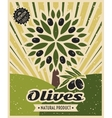 Vintage olive poster template design vector image vector image