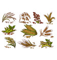 grain and cereals isolated icons vector image vector image