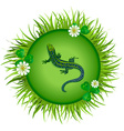 lizard on a meadow vector image vector image